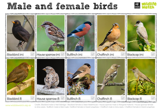 Male and female birds spotter
