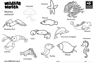 Marine colouring in
