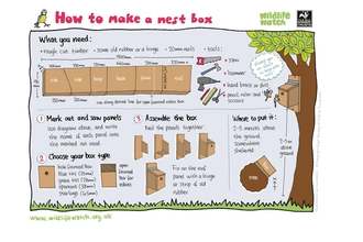 Make a nest box