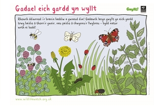 grow wild garden welsh