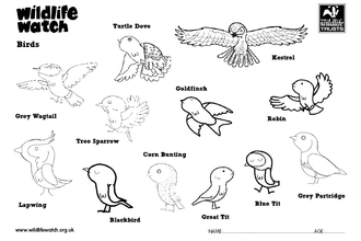 Birds colouring in