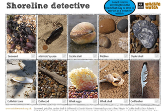 Shoreline detective spotting sheet