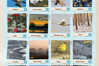 Winter wonders wallchart