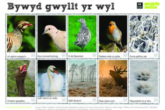 Festive wildlife Welsh