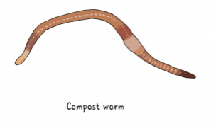 compost worm