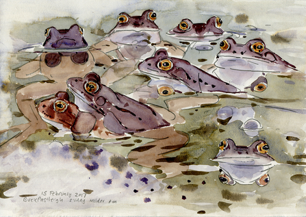 Common frogs - John Walters