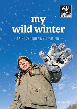 my wild winter
