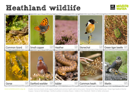 heathland wildlife