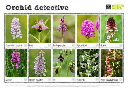 orchid spotter sheet