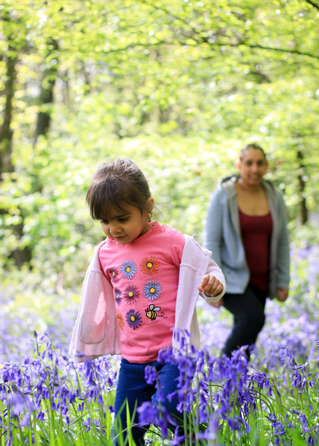 People and bluebells